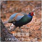 鳥獣の保護及び管理並びに狩猟の適正化に関する法律(鳥獣法)