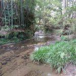 川が隣接する山林を所有。利用価値はあるのか?