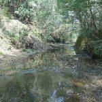 買った山林に隣接する川を調査してみた