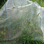 山林で自家栽培。鳥獣被害とかを受けないための施策をするも