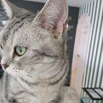 【フロンティア精神】猫カフェってネコキャバクラなんじゃないか