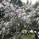 平成最後の山林開拓【大地を平らにする計画終了のお知らせ】