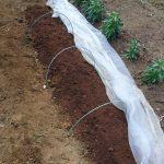 少量のたい肥でも育てられる方法を発見。畑で自家栽培を目指す