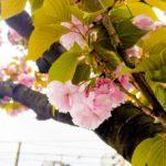 川崎コリアタウン桜本散策。池上町の焼肉店「道飛館」