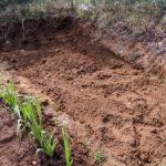 【家庭菜園】バジルを植える。そしてサツマイモを植えるための開墾