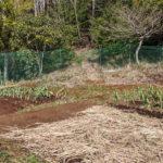 【自家栽培】作物が鳥獣被害に遭わないために
