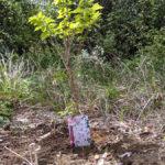 【サクラプロジェクト】所有地に桜の木を植える【花見し放題】