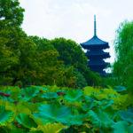 京扇子のルーツは東寺にあった。京都で買うおススメ扇子