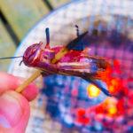 【昆虫食】バッタの味は海老ではなくバッタの味がした