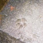 【猫の細道】尾道の裏路地、猫の足跡を求めて